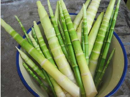 bamboo-shoots-for-healthy-weightloss-benefits-recipe