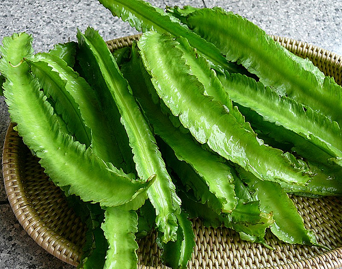 winged-bean