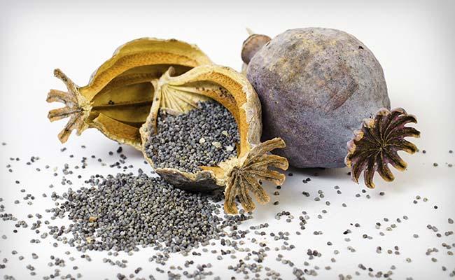 poppy-seeds-generic_650x400_41460458394
