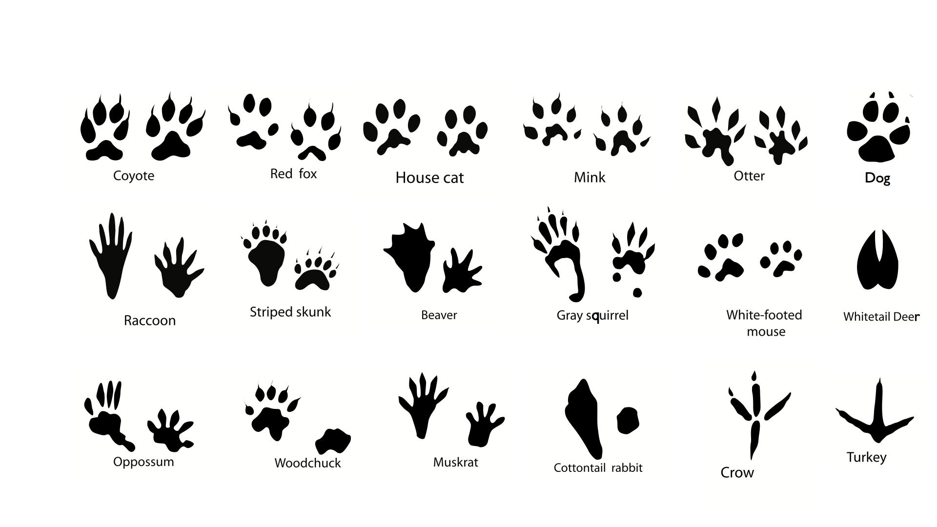 key-to-animal-tracks