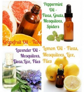 homemade-natural-bug-repellent-274x300
