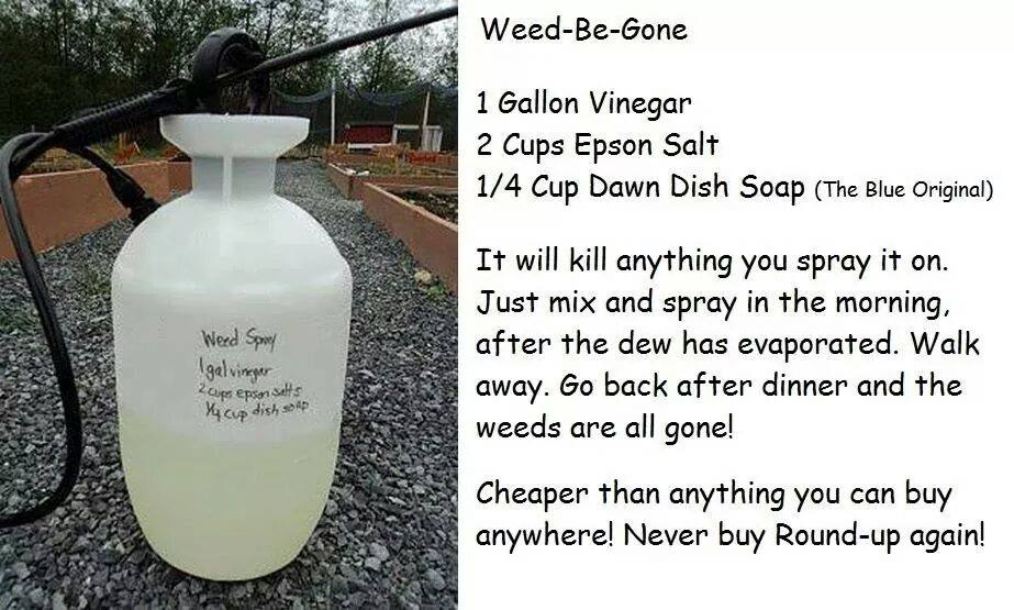 how-to-make-diy-weed-killer-200100da