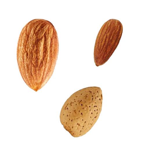 johnstone-river-almond-nutritional-aspects