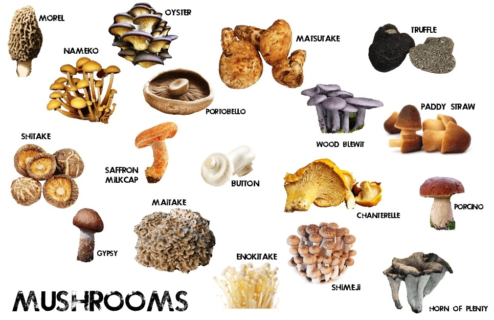 basic-mushrooms