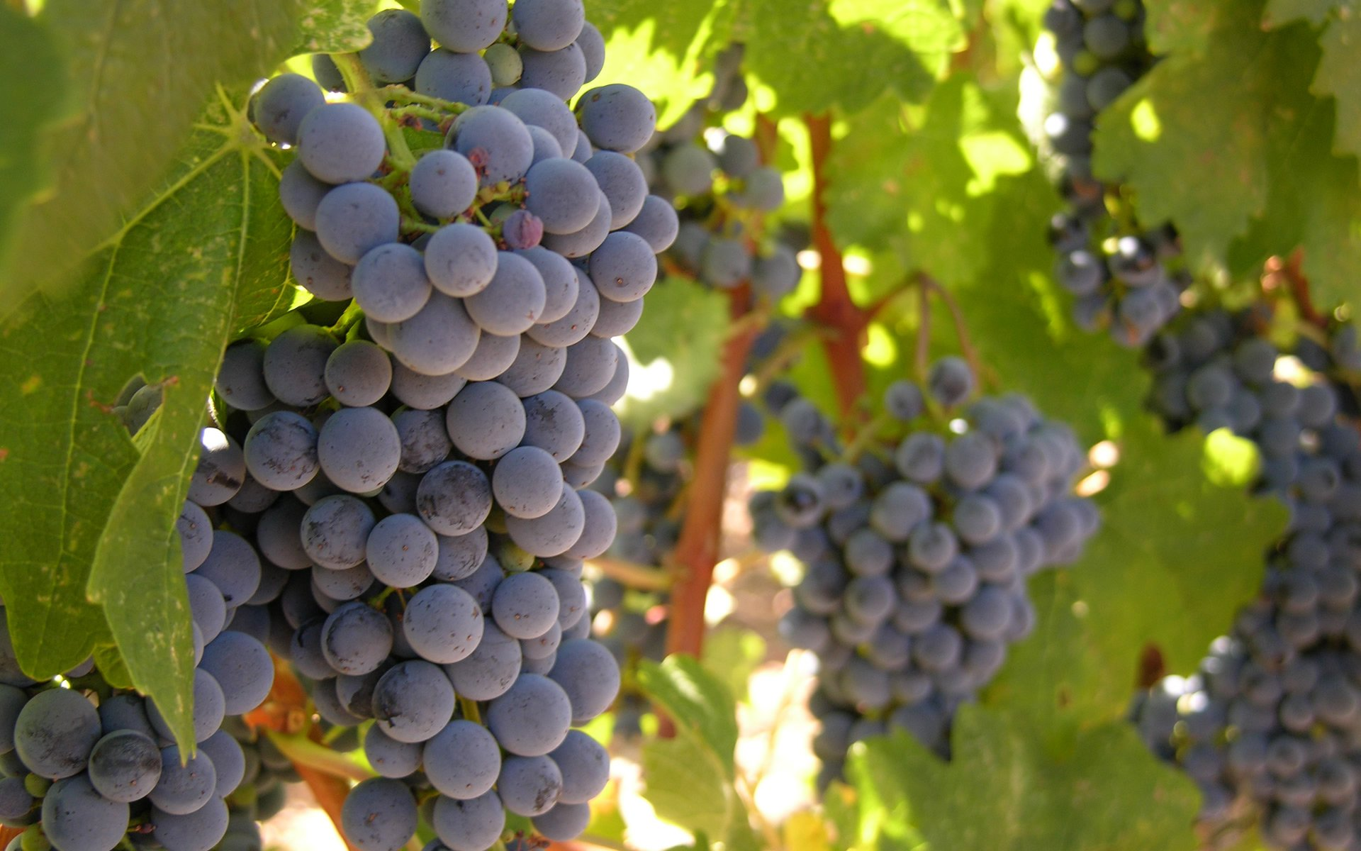 patient-life-high-endometriosis-stage-backgrounds-grapevines-images