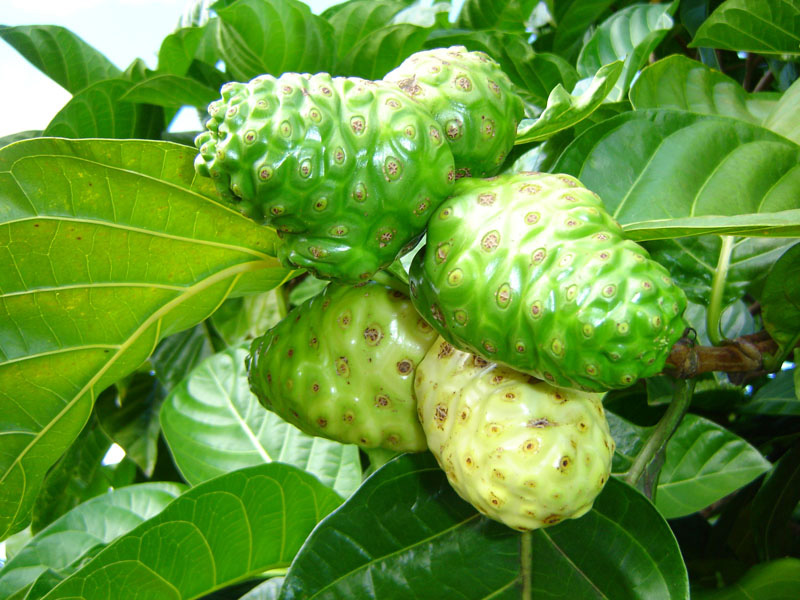 ariix-rejuveniix-noni-super-fruit