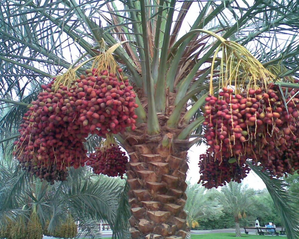 datetree
